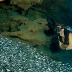 Cayman wins Best Diving award