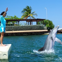 Dolphin Cove, Grand Cayman